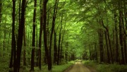 Beautiful Nature Wallpapers - Part 1 74b322108361865
