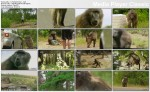 Pawianem byæ / Baboons with Bill Bailey (2011) PL.TVRip.XviD / Lektor PL